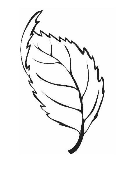 Раскраски букеты листья
