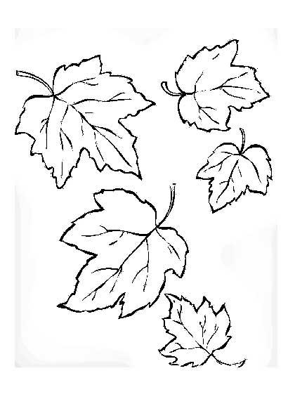 листики липы фото