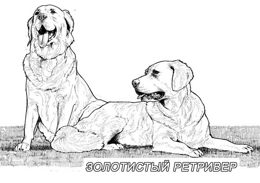 Раскраска собак - 2