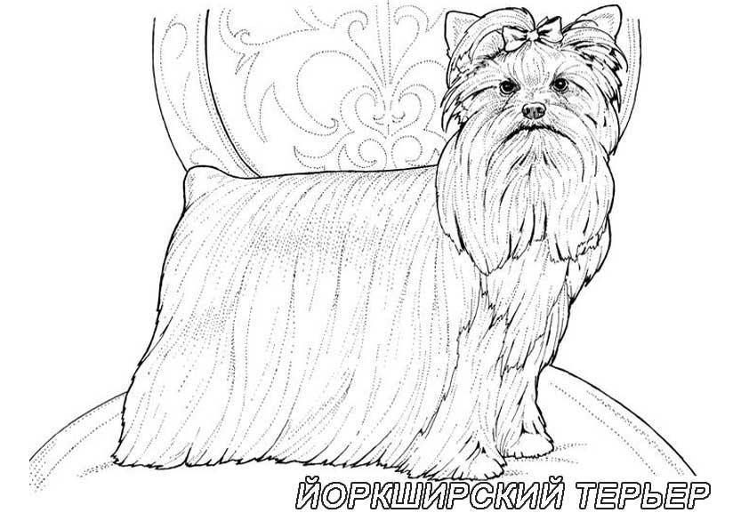 Раскраски собаки с породами