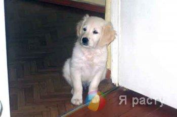Ребенок принес с улицы щенка