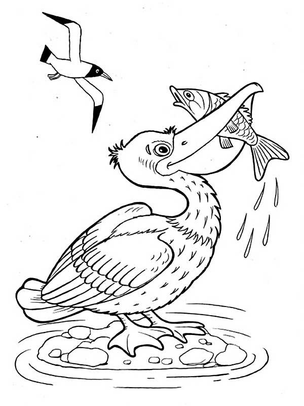 Раскраски для детей морж