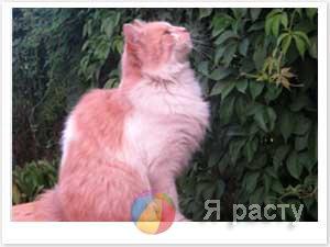 Загадки про кота