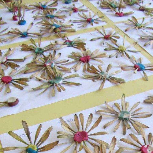Хризантемы из семян ясеня
