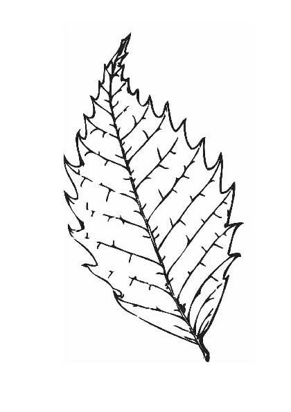 Раскраски с осенними листьями
