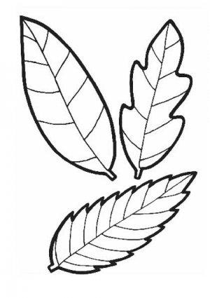 Раскраски осенних листьев