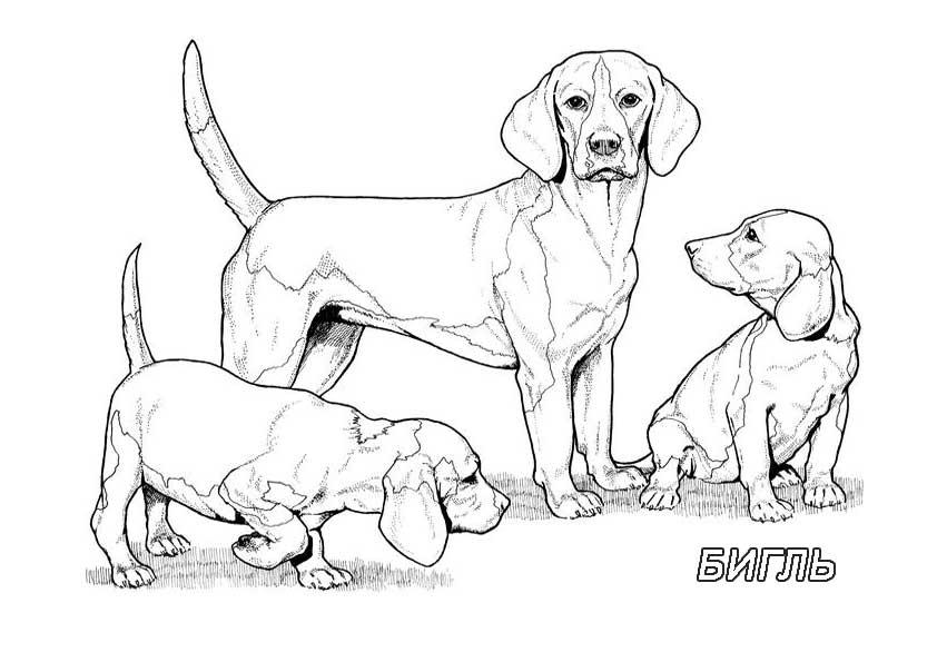 Породы собак раскраска распечатать