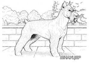 Породы собак. Раскраски