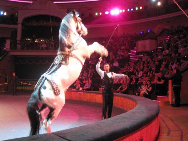 Минский цирк
