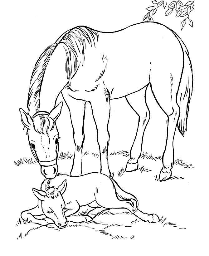Раскраски лошадей жеребят и пони