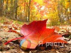 Раскрась осень