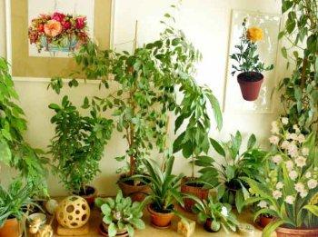Экология в быту - экология дома, экология в квартире