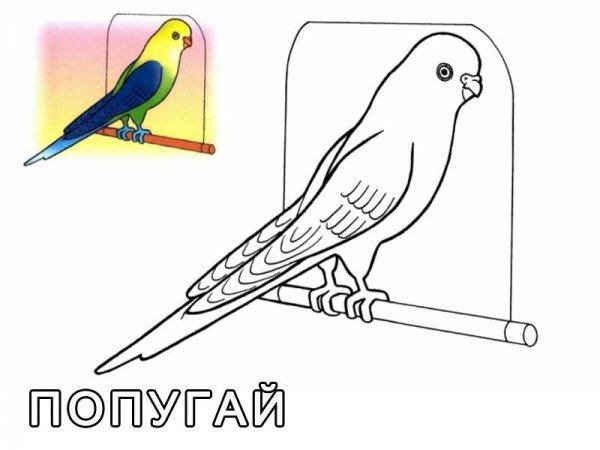 Домашние птицы. Раскраски