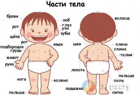 Загадки про части тела