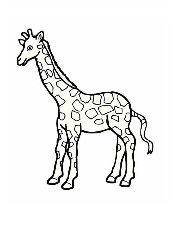 Жирафы. Раскраски для детей. Скачать бесплатно
