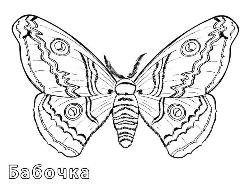 бабочки раскраски я расту сайт интересных и полезных