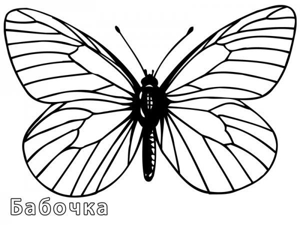 Бабочки. Раскраски