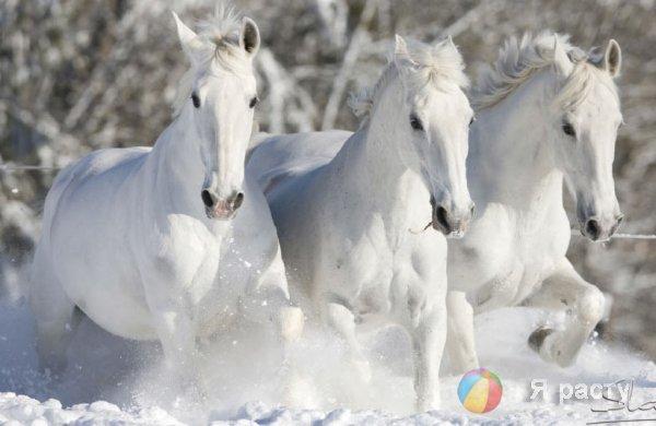 Три белых коня. Песенка их фильма Чародеи