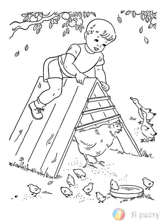 Мальчик и куры