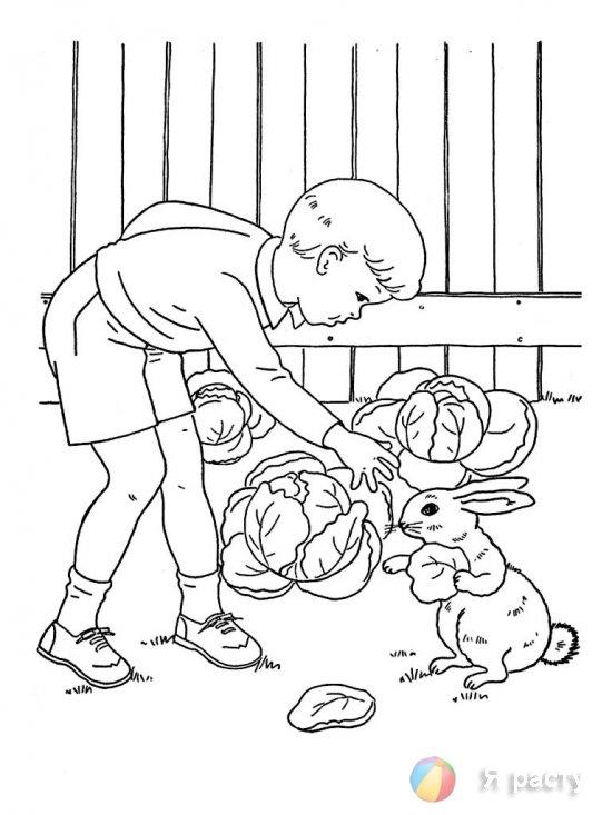 Мальчик и кролик