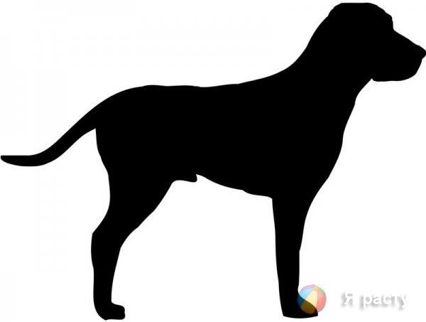 силуэт собаки