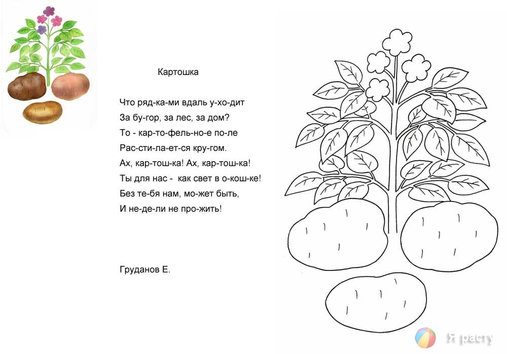 раскраска с загадками про фрукты риелторы