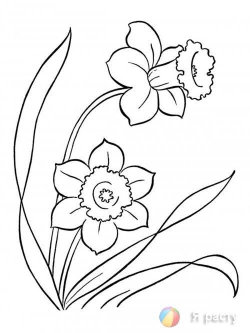 Весенние цветы. Раскраски