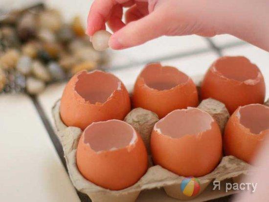рассада в яичной скорлупе