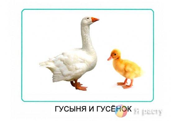Мамы и дети. Карточки