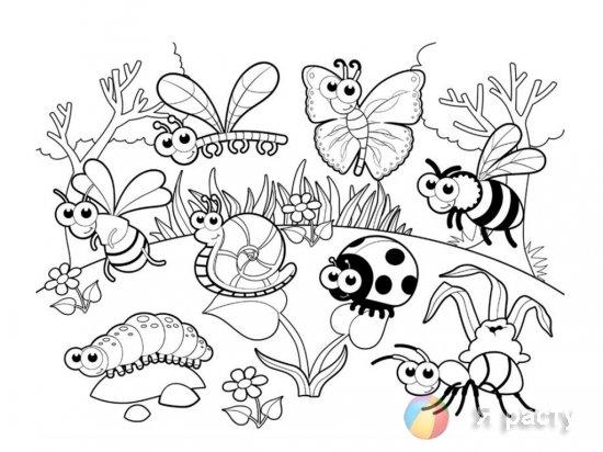 Веселые букашки. Раскраски для малышей