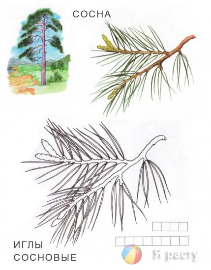Осень. Деревья и листья