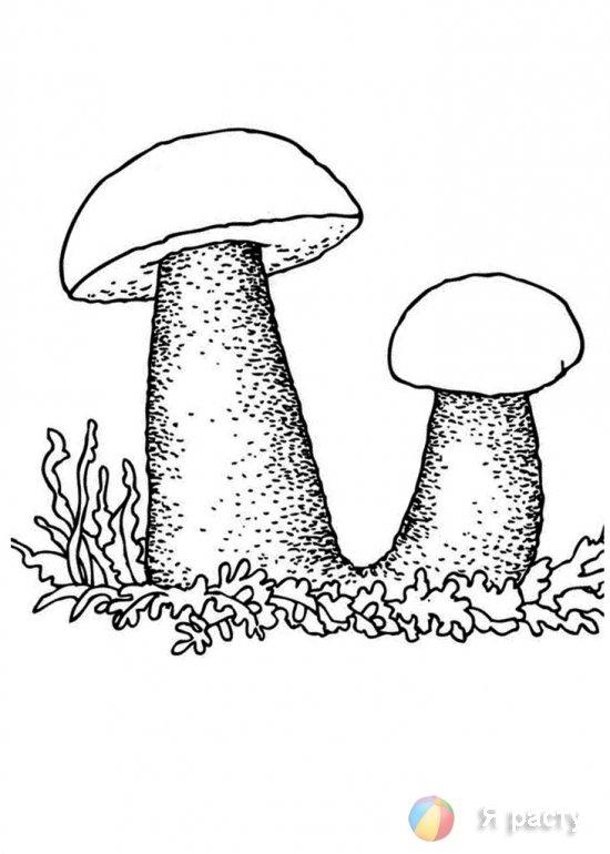 Осенние грибы. Раскраски