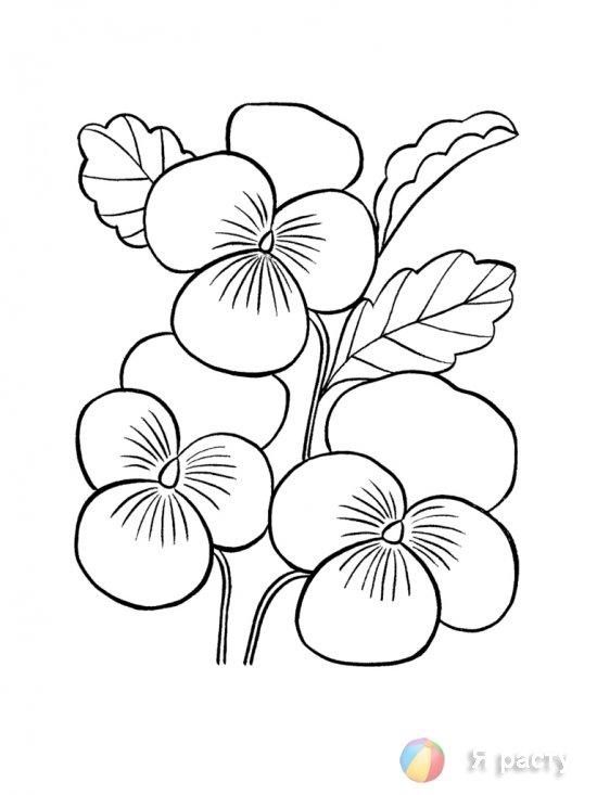цветы. картинка для раскрашивания. фиалки