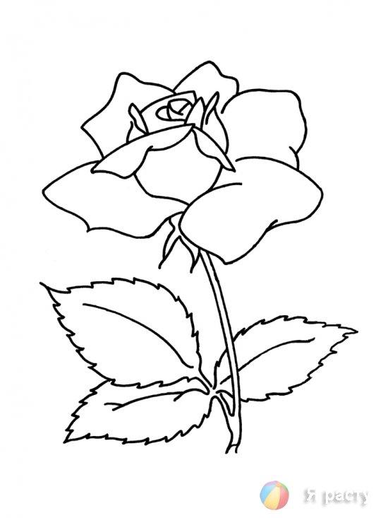 цветы. картинка для раскрашивания. роза