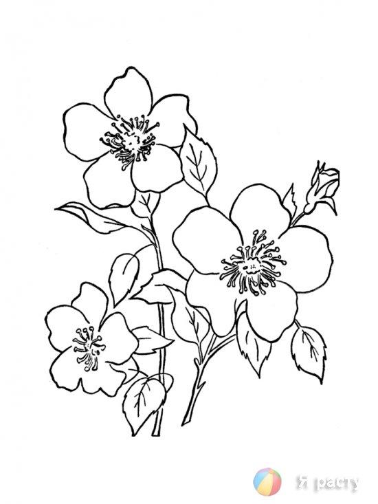цветы. картинка для раскрашивания.