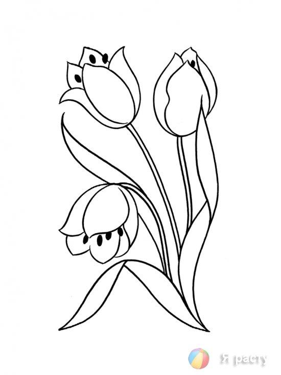 цветы. картинка для раскрашивания. тюльпан