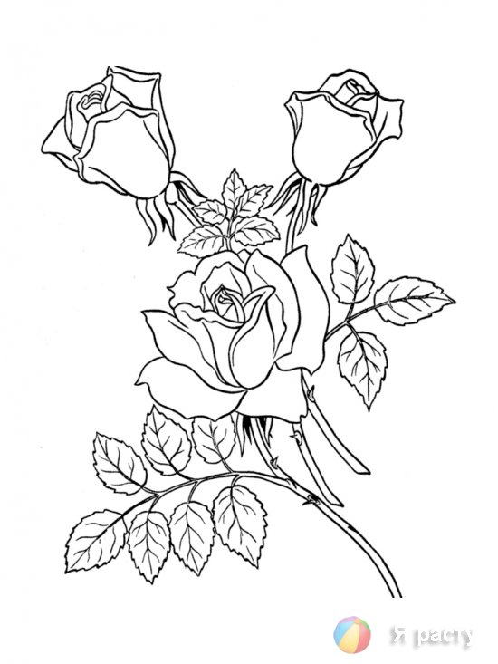 цветы. картинка для раскрашивания. розы