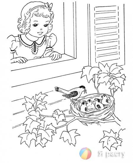 Птички. Раскраски для девочек