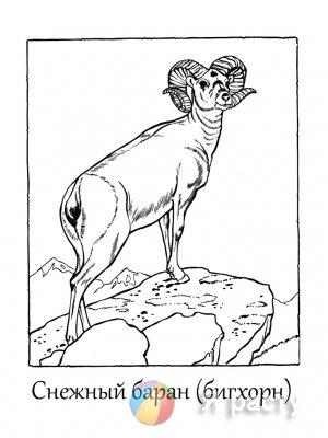 Крупные травоядные и всеядные животные. Раскраски