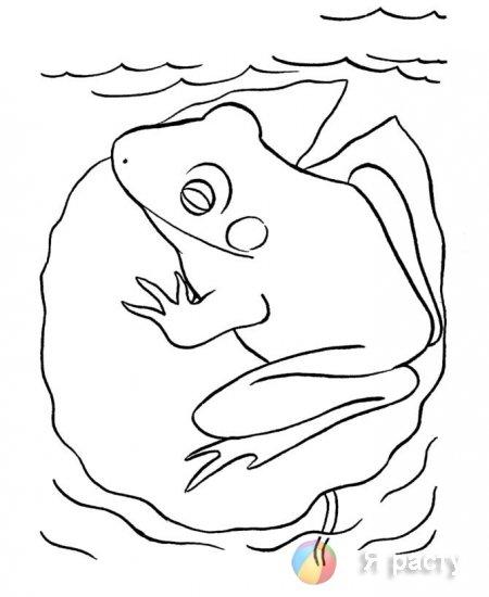 Раскраски жаб и лягушек